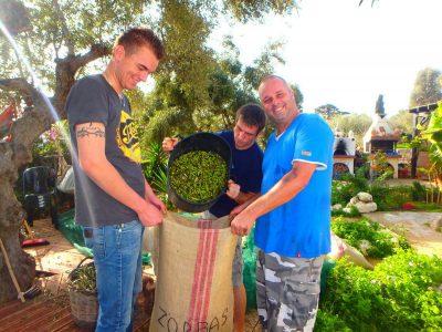 Voorbereiden op de olijfoogst op Kreta