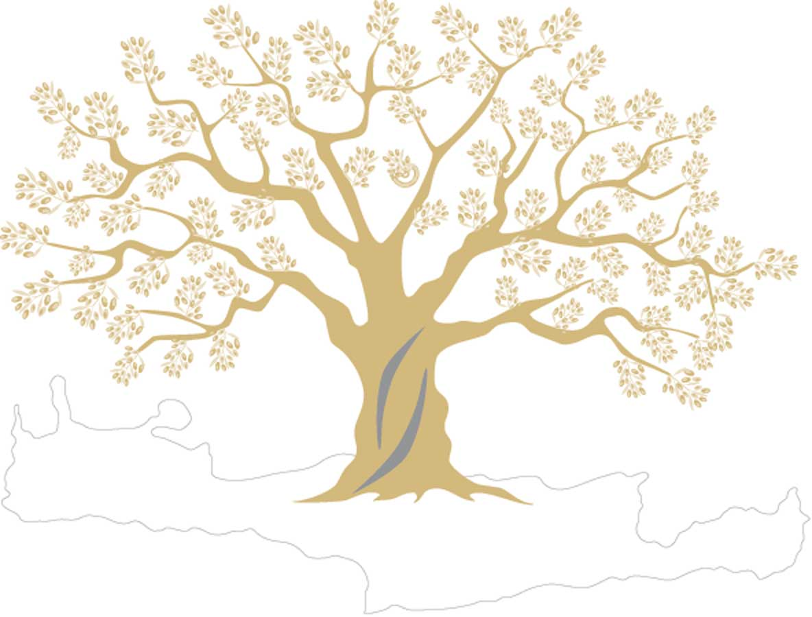 kreta olijfboom
